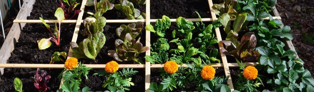 Square Foot Garden - Plantgrowpick