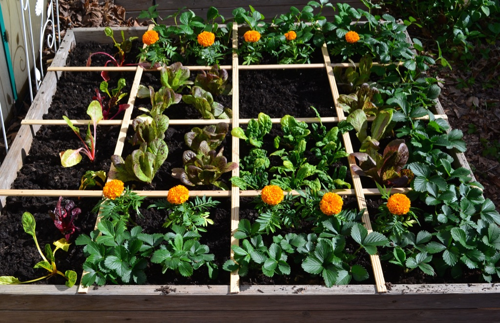 Square Foot Garden - Plantgrowpick