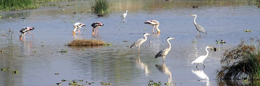 Keetham Lake of Agra