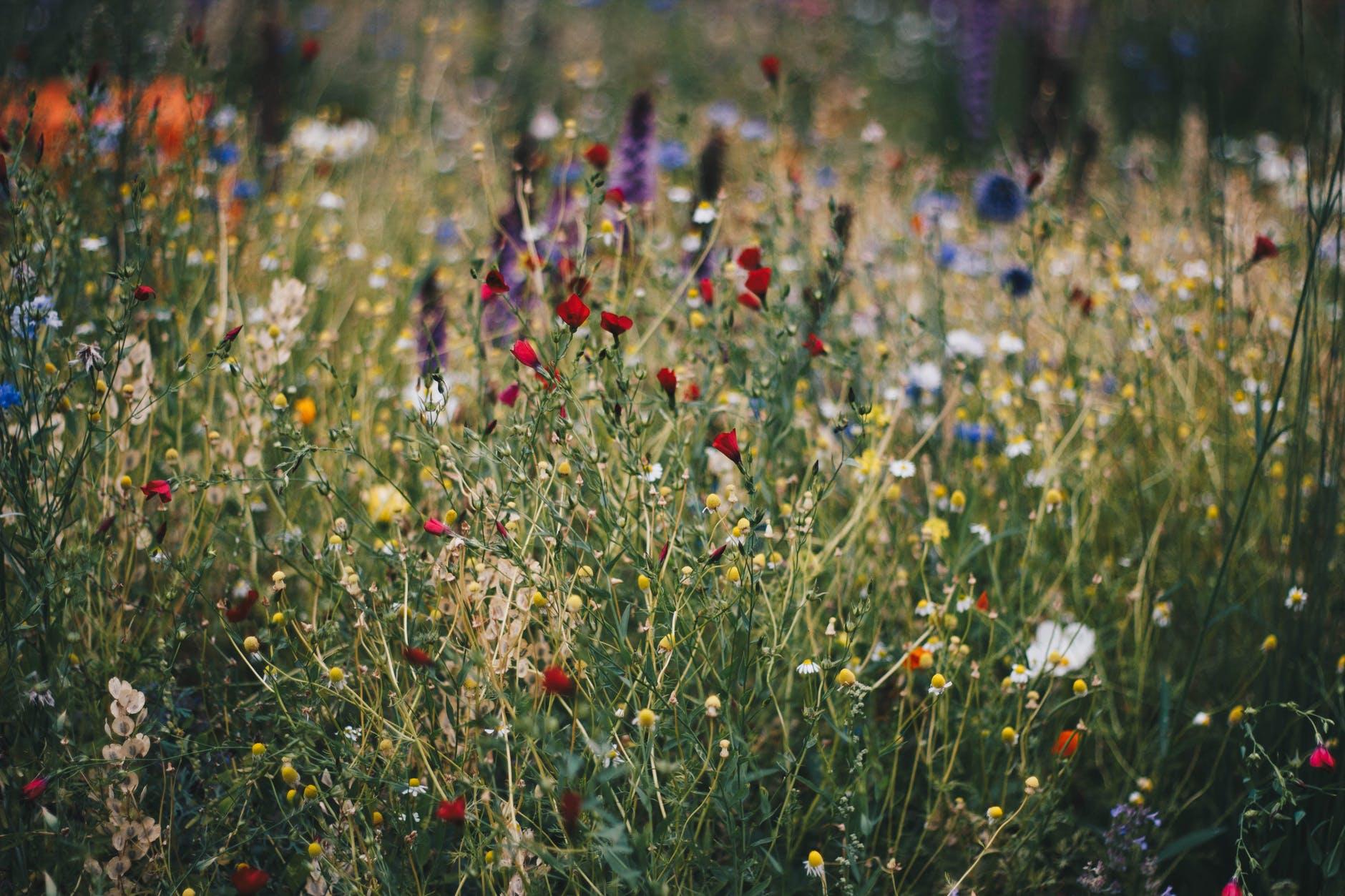 Plantgrowpick - Trending Plants list