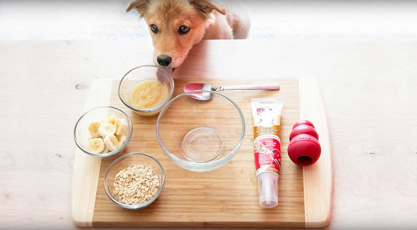 Oat meals for dogs