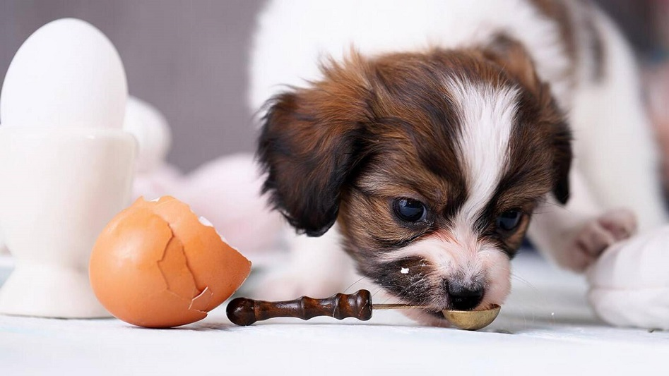 Eggs Diet For Dogs