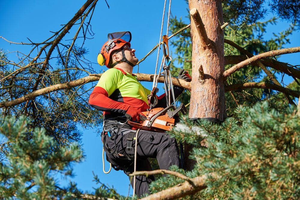 Know the 5 Reasons To Implement Tree Lopping Technique