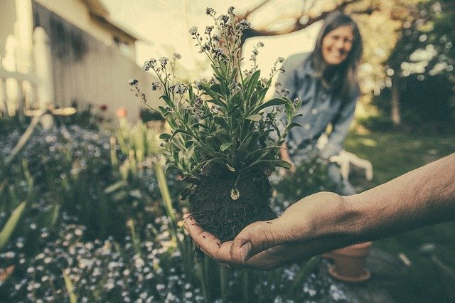 A person holding a plant to be replanted