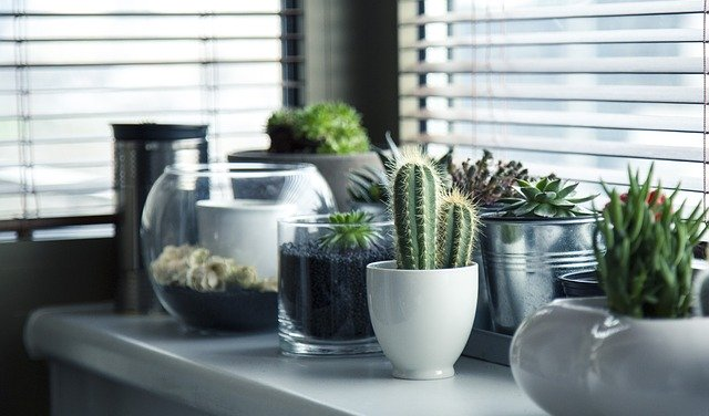 Several potted plants