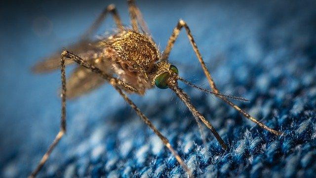 Mosquito bites through clothes