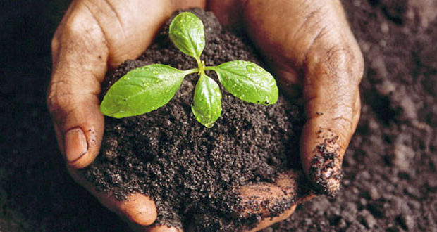 History And Technical Advancement In Indian Agriculture In The Last Decade